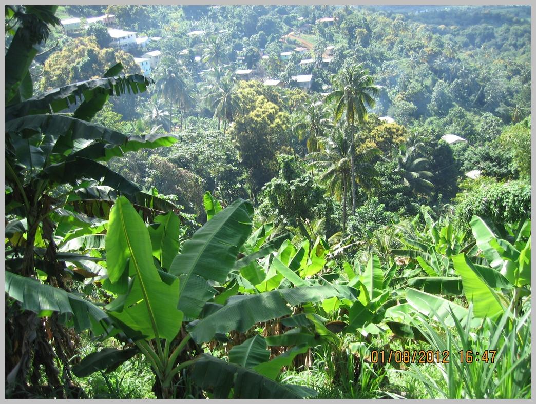 Antille-027