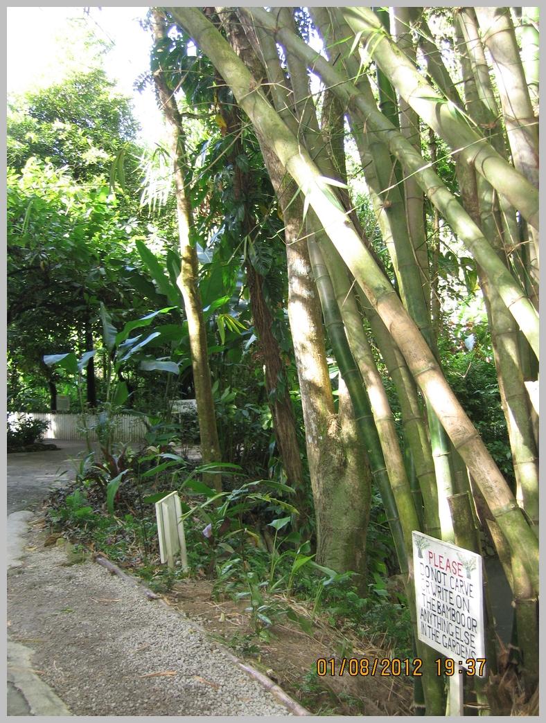 Antille-082