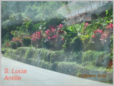 Antille-026