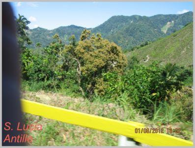 Antille-059