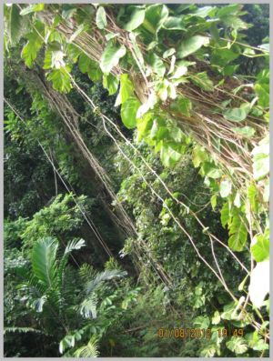 Antille-088