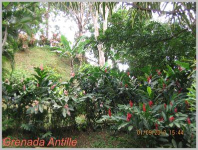 Antille-105