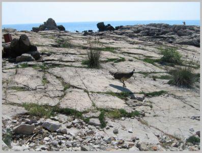 Crociera2005-058